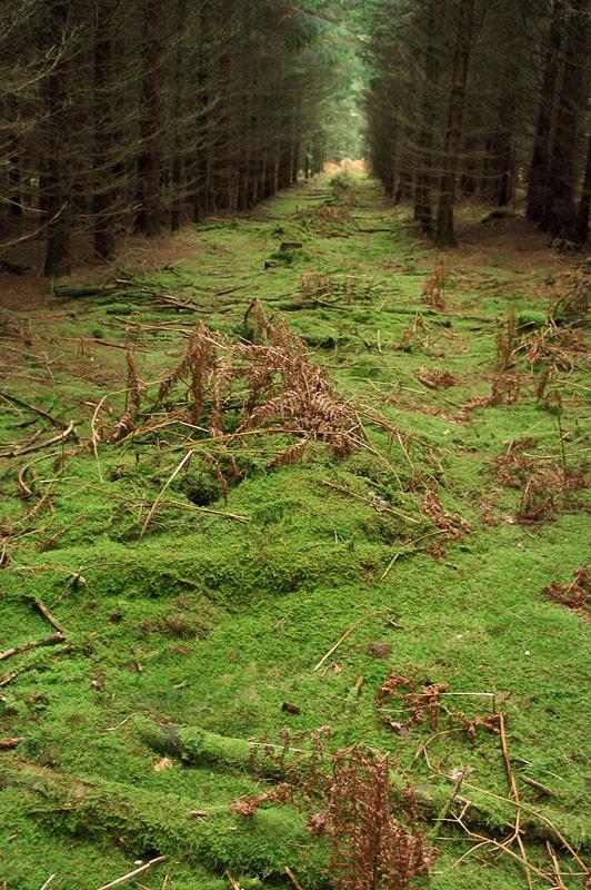 Лес в Нормандской Швейцарии