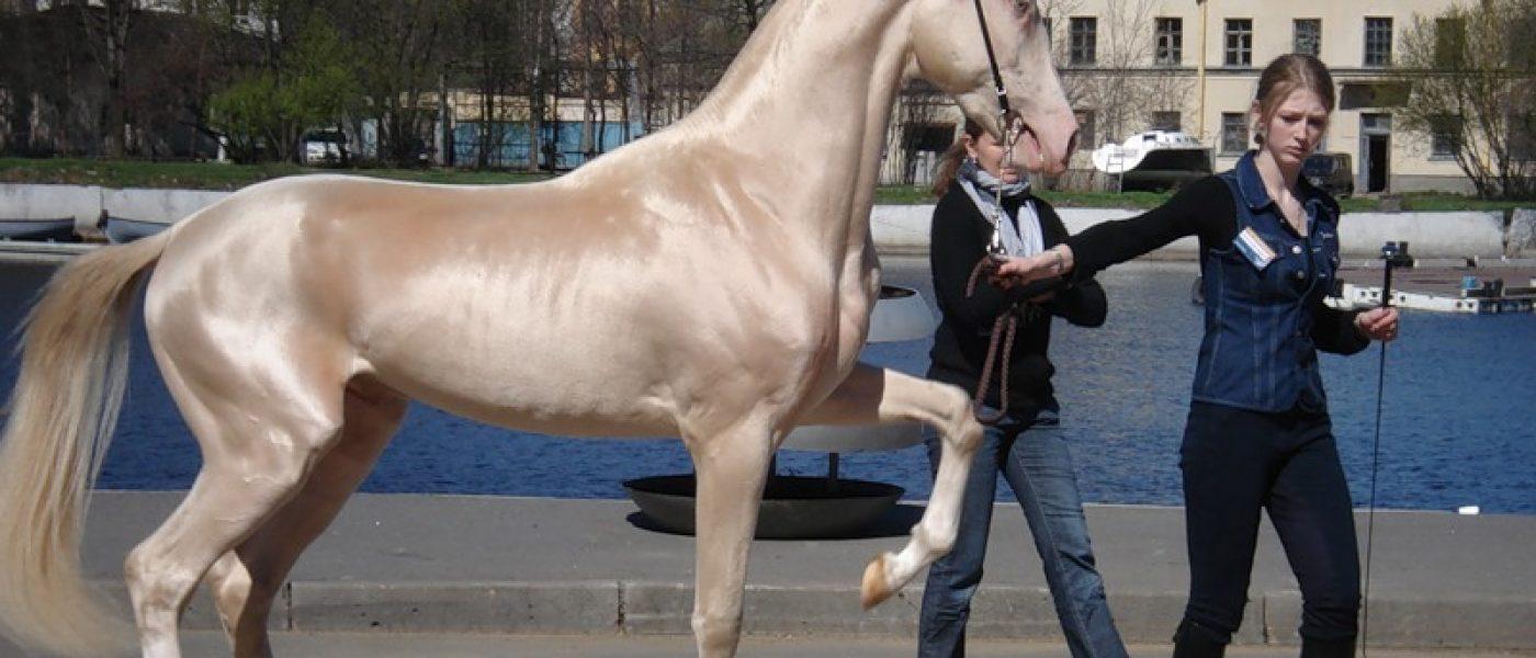 Поход за лошадьми ханьского императора У-ди