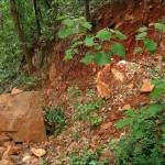 Почвы Китая