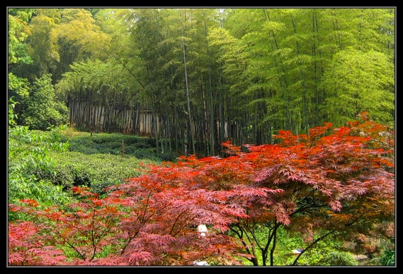 Парк в Ханчжоу