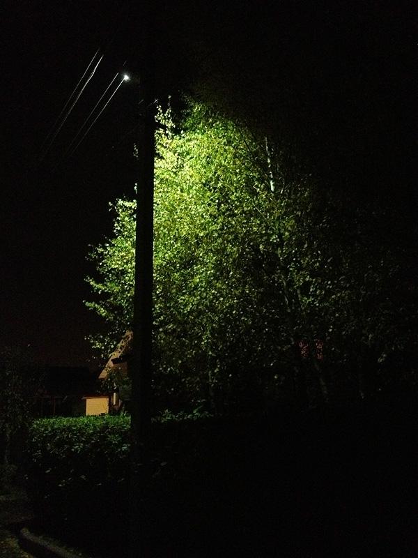 Ночь, дерево, фонарь...