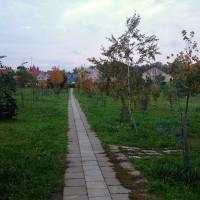 Мои ежедневные прогулки: польза и приятные эмоции