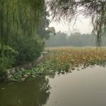 Парк пурпурного бамбука в Пекине