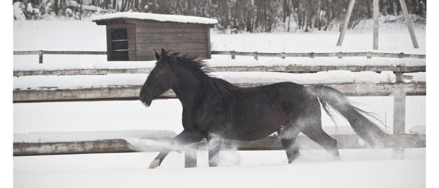 Стоит ли заводить лошадь? Советы сомневающимся и начинающим коневладельцам