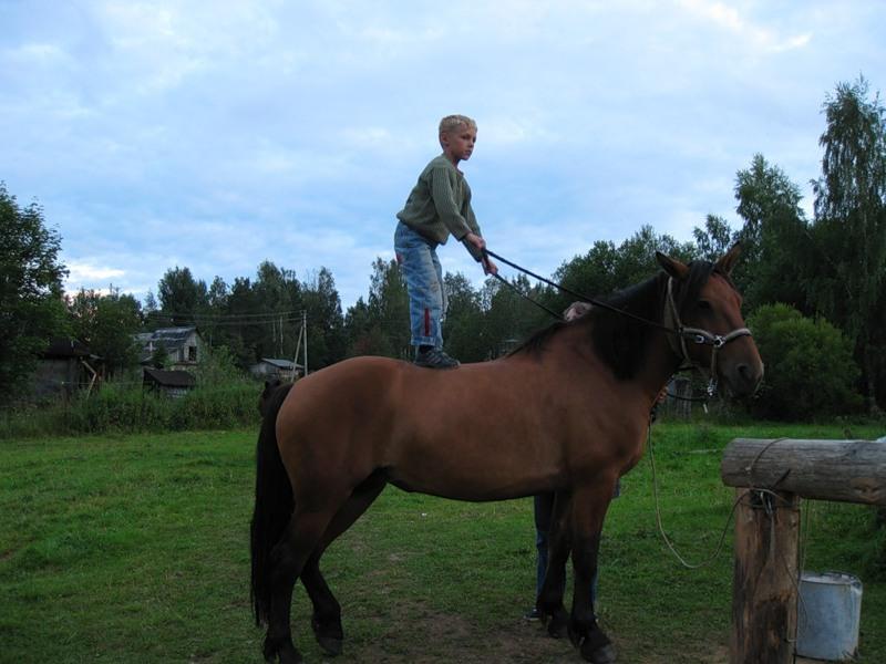 Занятия с лошадьми