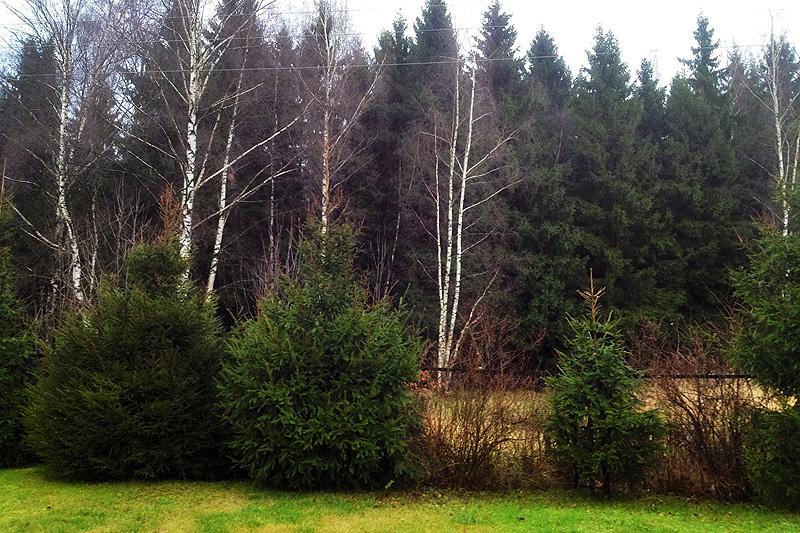 Ноябрь, лес, Подмосковье