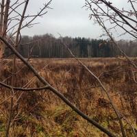 Ноябрьская природа — прогулки в ветер и в дождь