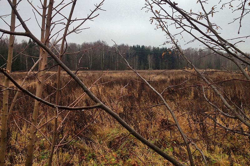 поле, лес, Подмосковье