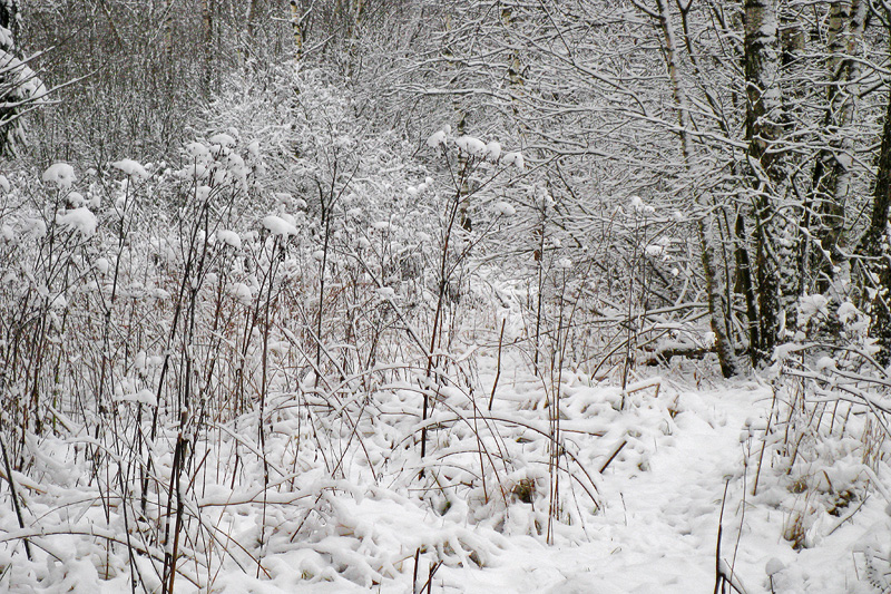 Белый лес