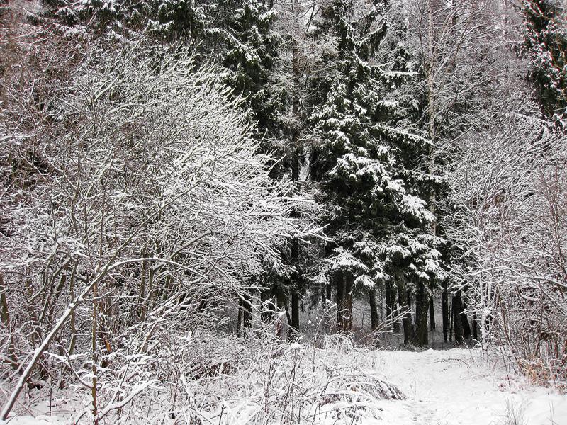 Рисунки зимнего леса