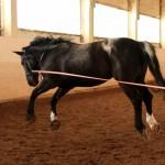 Лошади тоже умеют летать