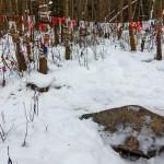 Киндяковский камень зимой