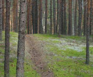лес, тропа