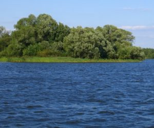 ивы, Иваньковское водохранилище