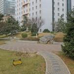 Сад во дворе нашего дома в Пекине