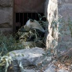 Пекинский зоопарк — сад десяти тысяч животных
