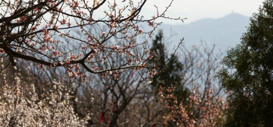 Парк Сяншань — весна в горах и панорамы Пекина с 500-метровой высоты
