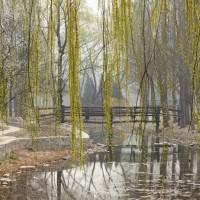 Пекинский смог: опасная красота
