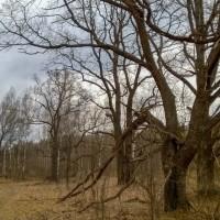 Бочка, плац, поля, леса — программа выполнена!
