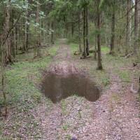 Дорога через лес из Поседкино в Рождественно: путь открыт!