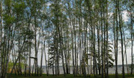 На Пестовское водохранилище и к лесному озеру