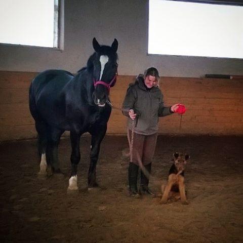 Собака и лошадь