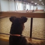 Собака и лошадь: Гера знакомится с Кубиком