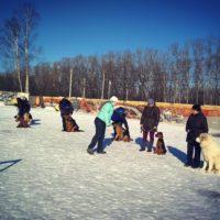 Гера — ученица: занимаемся на собачьей площадке