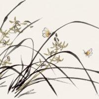 Изящная скромница орхидея в китайской культуре