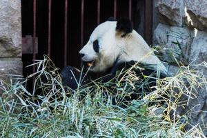 Пекинский зоопарк, достопримечательности Пекина