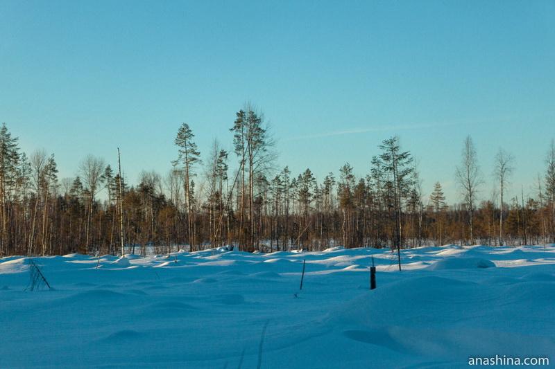 Лес, Костромская область