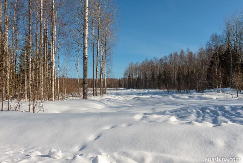 Лесная опушка, Вологодская область