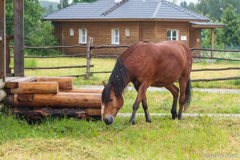 Пасущаяся лошадь, Семёнково