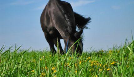 Для чего заводят лошадей? Категории коневладельцев