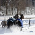 Сколько стоит содержать лошадь?