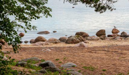 Жизнь и смерть отца финской литературы Микаэля Агриколы