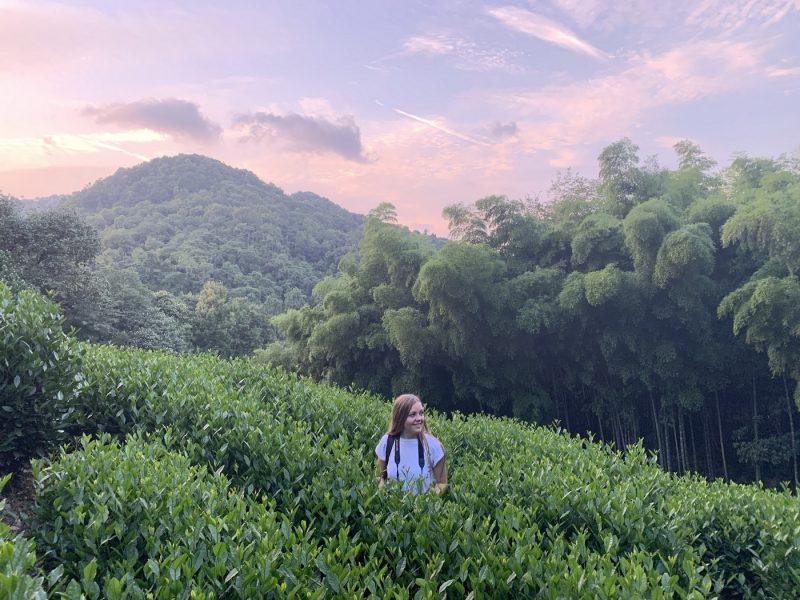 Чайные плантации, Ханчжоу, Китай, закат