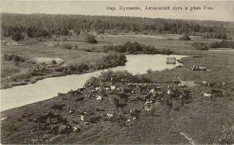Акулово. Заливные луга на реке Уча, 1910 год