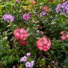 Фотозарисовки из нашего сада: наступает осень