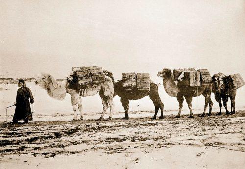 Чайный караван в Монгольской степи