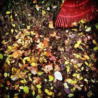 Почему осенью я обязательно убираю в своем саду опавшие листья