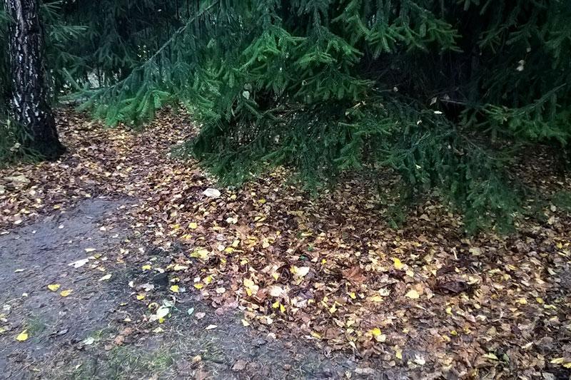 Листья под деревьями
