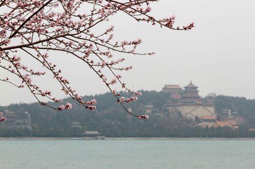 Весна в парке Ихэюань