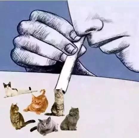 Вот что получается, если словосочетание 吸猫 перевести буквально