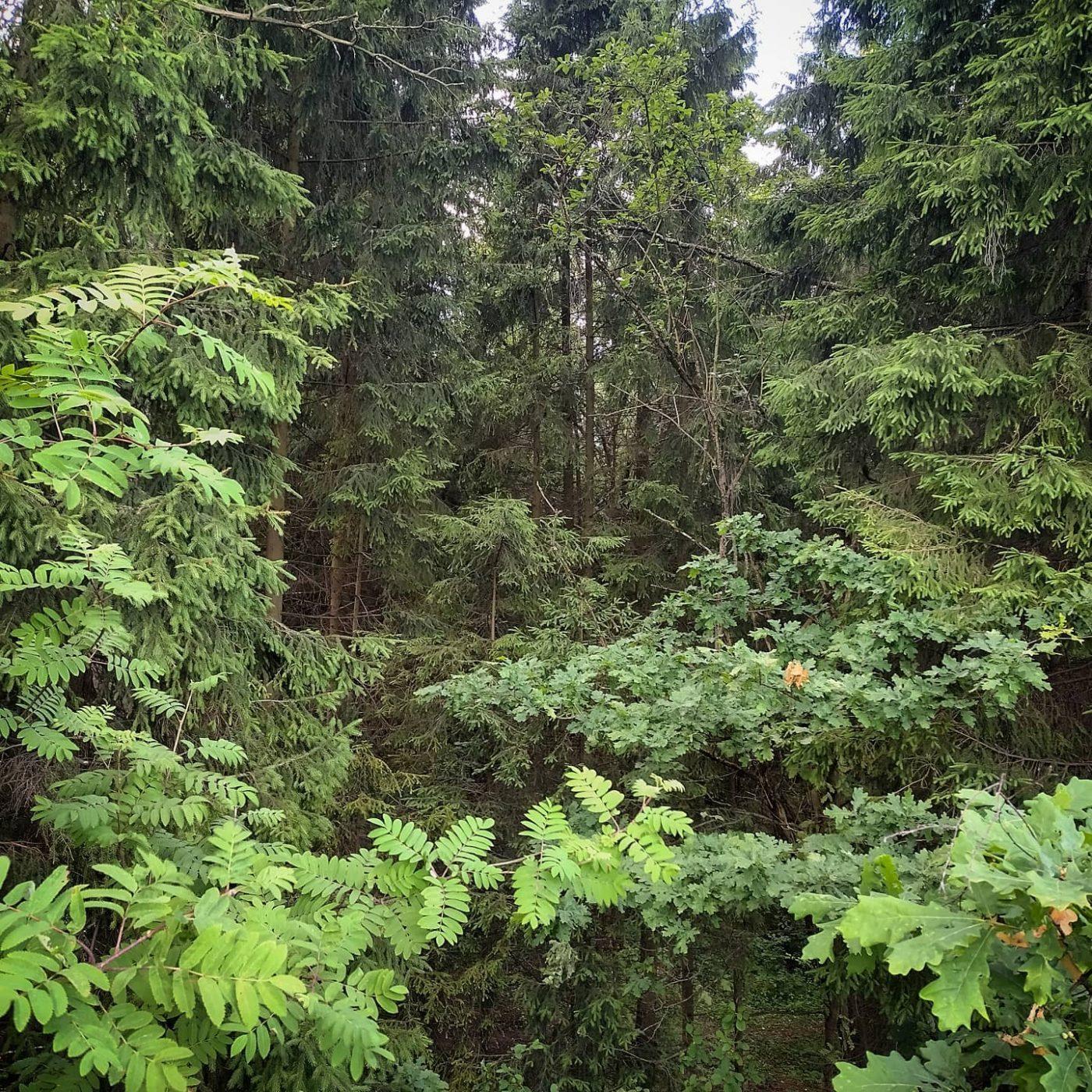 Лес, Подмосковье