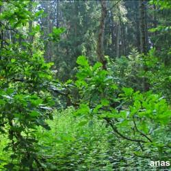 Лес в Лесном городке