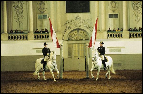 Испанская школа верховой езды в Вене. Выступление