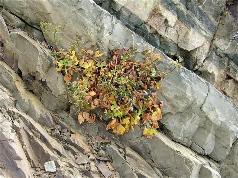 Растение в расщелине