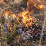 Лесные пожары — что делать и как себя вести?