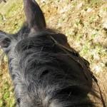 Лошади и история